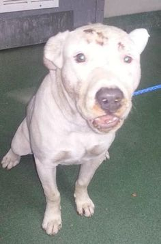 1689897 very sweet dog , needs help, please !!!!. Broken jaw! SUN Program Category D-2 — hier: Miami Dade County Animal Services. https://www.facebook.com/urgentdogsofmiami/photos/pb.191859757515102.-2207520000.1428206574./956616167706120/?type=3&theater