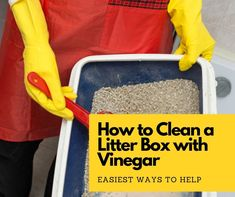 How to Clean a Litter Box with Vinegar: 4 Simple Steps - Catthink Cat Care Tips, Dog Care, Pet Tips, Rabbit Litter, Litter Box, Best Cat Litter, Pumpkin Dog Treats, Cat Scratching Post, Homemade Dog Food