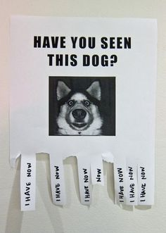 Have you seen this dog ?