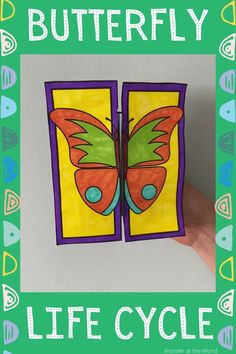 Stages Of A Butterfly, Butterfly Life Cycle, Lifecycle Of A Butterfly, Spring Arts And Crafts, Easy Arts And Crafts, Preschool Learning Activities, Kindergarten Activities, Sunflower Life Cycle, Life Cycle Craft