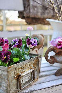 HWIT BLOG: Flores pelo Titti & Ingrid - Primavera na varanda