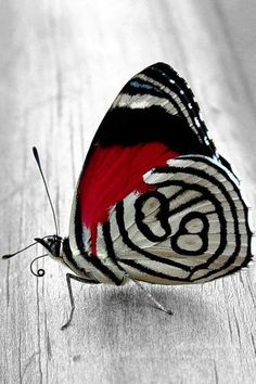 Amazing my favorite colors on a beautiful butterfly . I love butterflies and hearts :) B.P.