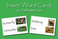 Insect Picture Word Cards...has a bunch of word card sets...great for writing center and interactive charts