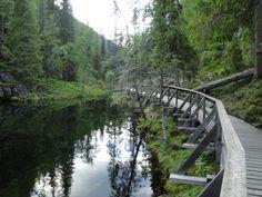 Parque Nacional Pyhä-Luosto - sem neve