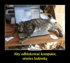 Sorry boss - LOLcats is the best place to find and submit funny cat memes and other silly cat materials to share with the world. We find the funny cats that make you LOL so that you don't have to. Silly Cats, Cats And Kittens, Cute Cats, Funny Cats, Funny Animals, Cute Animals, Crazy Cat Lady, Crazy Cats, Tierischer Humor