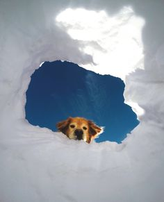 Dog Rescues Tennis Ball From Crevasse