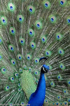 Beautiful Feathers! / Flickr - Photo Sharing! on imgfave