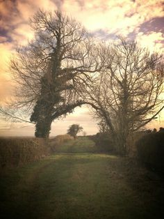 Tree arch on this weekends shoot,  edited on my app aviary