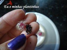Sementes da ripsalis pilocarpa(cacto epífito)