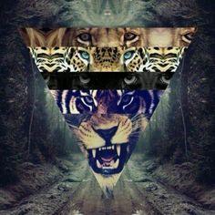 Meow.•°•°•°•°•