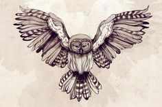 Owl Drawing...maybe we could ise this on the invitations