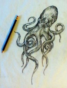 Tattoo sketch - Octopus by -  Ranz