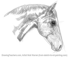 Best Photos of Horse Drawing Tutorial - How to Draw Horse Anatomy, Drawing Horses Step by Step and Basic Horse Head Drawing Horse Head Drawing, Horse Pencil Drawing, Tiger Drawing, Horse Drawings, Animal Drawings, Pencil Drawings, Crane, Horse Drawing Tutorial, Head Proportions