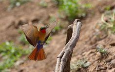 Incredible birdlife in Zakouma!
