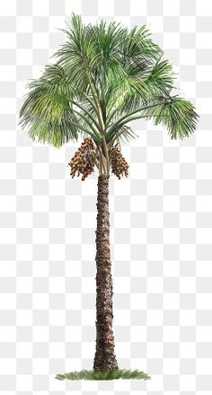 Ideas For Tree Architecture Vector Studio Background Images, Background Images For Editing, Photo Background Images, Photo Backgrounds, Tree Photoshop, Photoshop Images, Photoshop Design, Photoshop Elements, Palm Tree Png