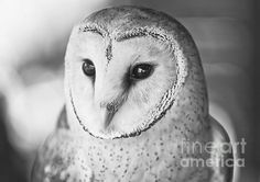 'Stylish' by Paulo Perestrelo © 2012 - Art & Owl Artwork, Wildlife Photography, Fine Art America, Bird, Wall Art, Stylish, Artist, Animals, Animales