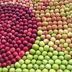 Patterned Apples