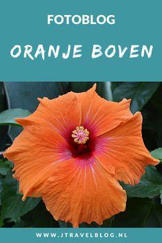 Deze fotoblog met oranje foto's heb ik vanwege Koningsdag gemaakt. Ik heb een aantal van mijn oranje foto's voor je op een rijtje gezet. Kijk je mee? #oranje #fotoblog #koningsdag #27april #fotografie #jtravel #jtravelblog