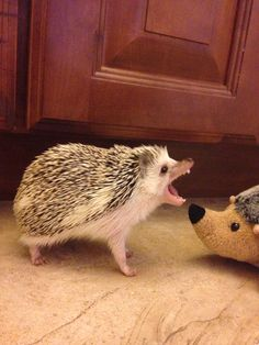 If any other hedgehog dares to trespass upon my land, I shall eat their nose!!