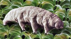 Tardigrades: Scientists discover how the water bears survives in such ex...  Tardigrades: Scientists discover how the water bears survives in such extreme conditions.  Tardigrades, the odd microscopic animals also referred to as water bears, are known for the puppet-like appearance and capacity to persist despite extreme environments and states According to a new report in the journal Cell...  #tardigrades #waterbears #tardigrade #Abantech #Cosmos #space #science #art #yourmom #wtf…