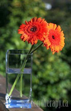 Rearrange your flower arrangements!  Orange Gerbera Arrangement