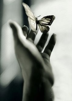 <3 open your hand.. feel the fragile flutter of wings as you set your dreams free.. send them off with love and live in gratitude like they have all come true....... <3G<3R<3
