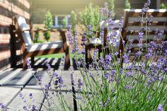 Spoznajte najkrajšie kultivary levandule. Ktorú z nich by ste uvítali v záhrade? | Záhrada.sk
