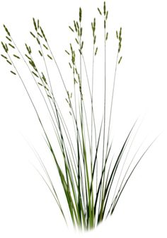 CUT OUT GRASS PNG - Google Search