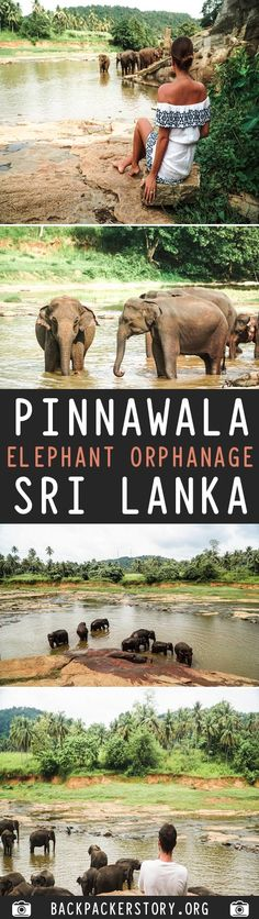 Pinnawala Elephant Orphanage is located in Pinnawala village. Around north east from Colombo in Sri Lanka. How to get to Pinnawala Elephant Orphanage Travel Guides, Travel Tips, Travel Destinations, Travel And Tourism, Asia Travel, Country Maps, Horse Carriage, Travel Plan, Freaking Awesome