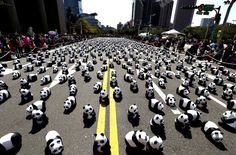 """Papier mache pandas, created by French artist Paulo Grangeon, are seen displayed outside the Taipei City Hall as part of an exhibition called """"Pandas on Tour""""… Teddy Bear Costume, Articles For Kids, Thing 1, Pet Costumes, Photo Diary, Endangered Species, French Artists, Funny Animal Pictures, Plein Air"""