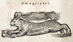 Squirrel This woodcut is an illustration from the book The history of four-footed beasts and serpents... by Edward Topsell, printed by E. Cotes for G. Sawbridge, T. Williams and T. Johnson in London in 1658. Special Collections, University of Houston Libraries (Public Domain)