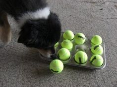 Muffin tin game. Entertaining food motivated game for your dog! What a great idea, I can't wait to try it with my dog!