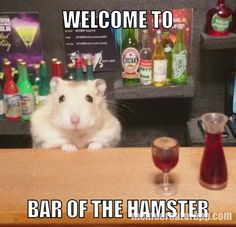 Welcome to the hamsters only BAR