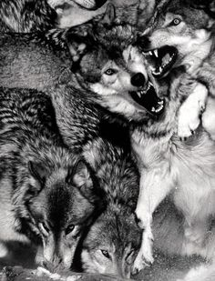 the woolf family.