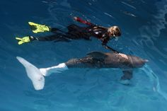 Winter, the dolphin with a prosthetic tail,  Clearwater aquarium.  [JIM DAMASKE | Times (2009)]