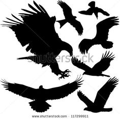 Birds of prey (eagle, hawk, falcon, griffon vulture etc.) vector silhouettes on white background. Layered. Fully editable by Denniro, via ShutterStock