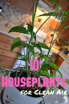 10 Houseplants for Clean Air Peace Lily (Spathyphyllium) Pot Mum Red-edged dracaena Golden Devil's Ivy or Pothos (Epipremnum) Snake Plant or Mother-In-Law's Tongue (Sanseveria) Warneck dracaena Gerbera Daisy Lilyturf Janet Craig dracaena English Ivy Air Plants, Garden Plants, Indoor Plants, Potted Mums, Mother In Law Tongue, Eco Kids, Peace Lily, Snake Plant, Gardening Tips