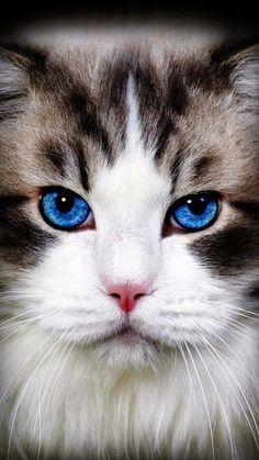 blu eyes..