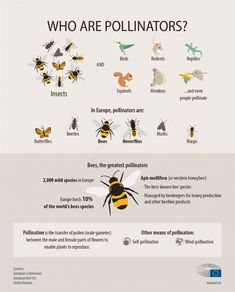 decline in bees and other pollinators . Reptiles, Bee Activities, Un Book, Butterfly Species, Plant Species, Extreme Weather, Rodents, Bee Keeping, Beetle