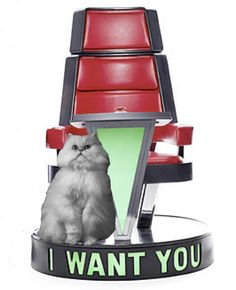 Purrfect the Cat ready for another episode of The Voice. #TheVoice