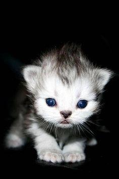 Baby kitten warm fuzzy
