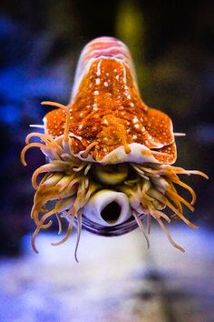 """Nautilus photographed from the front (via SF Academy of Science)"""" So apparently, nautilii look positively Lovecraftian when viewed face-on. Learn something new every day."""""""
