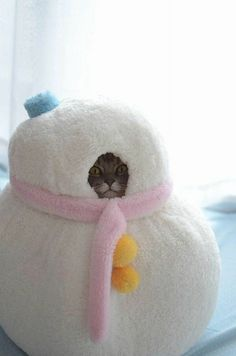 Funny Animal Pictures - View our collection of cute and funny pet videos and pics. New funny animal pictures and videos submitted daily. Crazy Cat Lady, Crazy Cats, Cute Funny Animals, Funny Cute, Hilarious, I Love Cats, Cool Cats, Gatos Cats, Pet Costumes