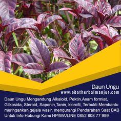 Tawk to obat wasir salep Wordpress Org, Profile, Plants, Garden, Acute Accent, User Profile, Garten, Planters, Gardening
