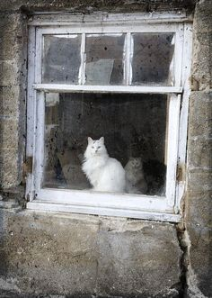 Barn Cats In Window