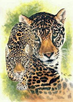 Barbara Keith - Compelling - Buy Realism Mixed Media - Watercolor Enhanced Colored Pe Artwork For Sale Wildlife Paintings, Wildlife Art, Animal Paintings, Animal Drawings, Jaguar Pictures, Jaguar Pics, Lion Tigre, Tiger Sketch, Wild Animals Photography
