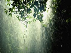 """I get something fulfilling from the scent, sound, and sight of rain""."