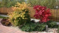 Realizace předzahrádky - Kopřivnice Plants, Flora, Plant, Planting