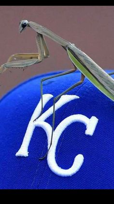 OMG the Rally Mantis is on with a Grand Mantis Slam...and on to a TWO game winning streak with the Rally Mantis !