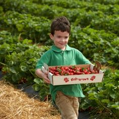 """Plan a """"berry"""" fun day at these pick-your-own farms in St. Louis."""